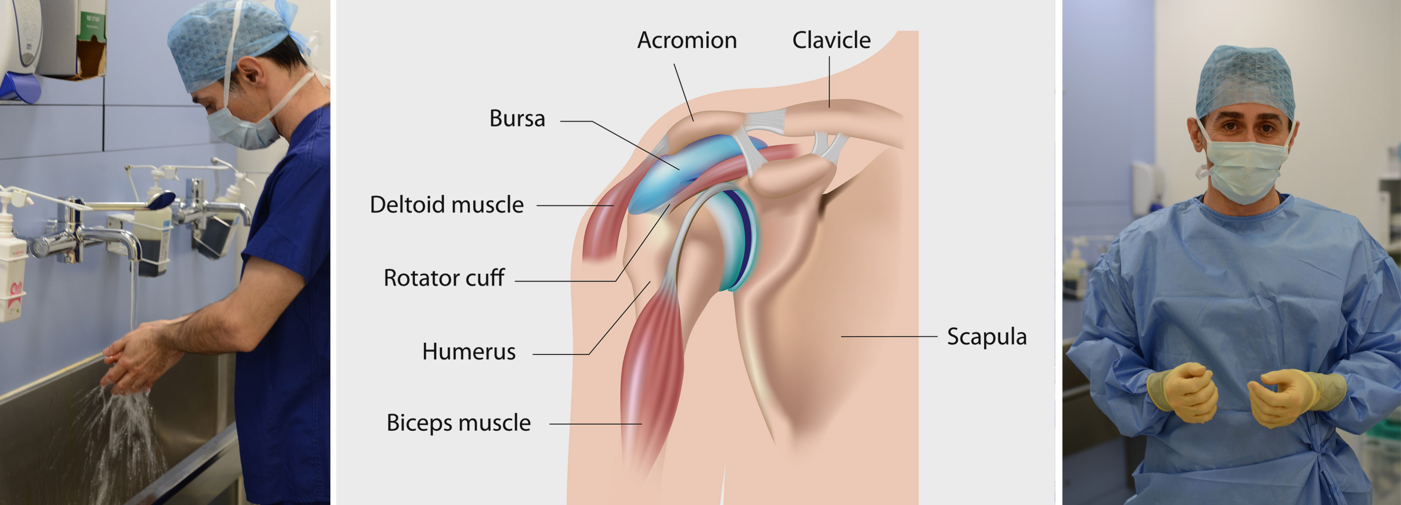 Shoulder Anatomy Omar Haddo Shoulder Surgeon